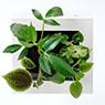 掛牆植物‧ABS盤‧大 組合C