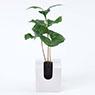 掛牆植物‧ABS盤‧小 咖啡木