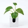 掛牆植物‧ABS盤‧小 優美鵝掌